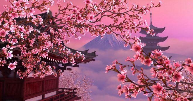 Уход за японской вишней