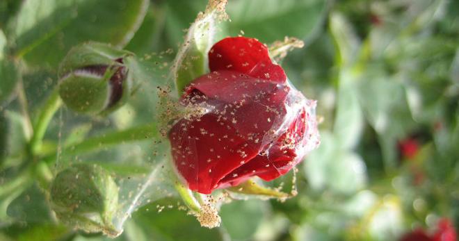 Дихлофос — панацея от вредных насекомых