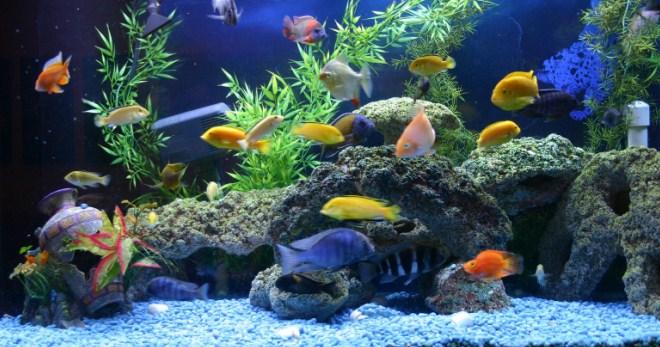 Как нужно чистить аквариум