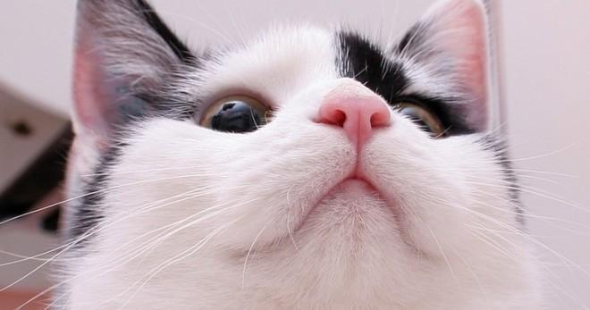 Почему у кота горячий нос. Теплый нос у кошки: состояние здоровья. Теплый нос у кошки