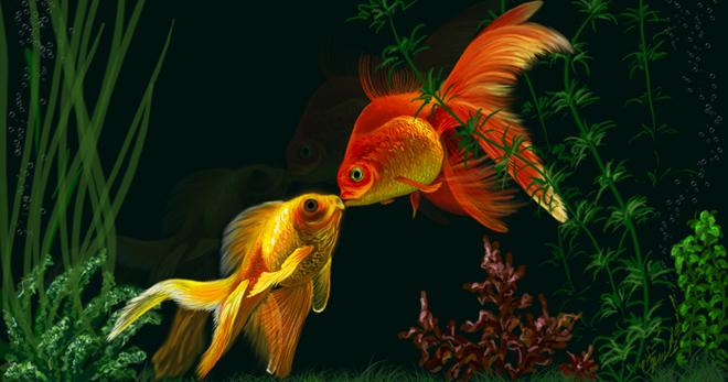 Разведение золотых рыбок в домашних условиях, условия содержания