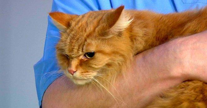 Лечение мочекаменной болезни у домашних котов симптомы и условия