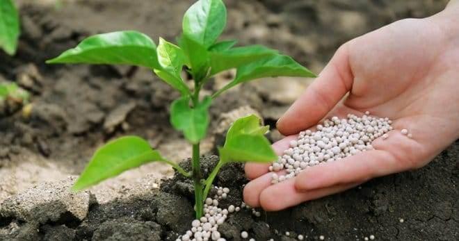 Удобрение азофоска - применение на огороде, для чего нужна?