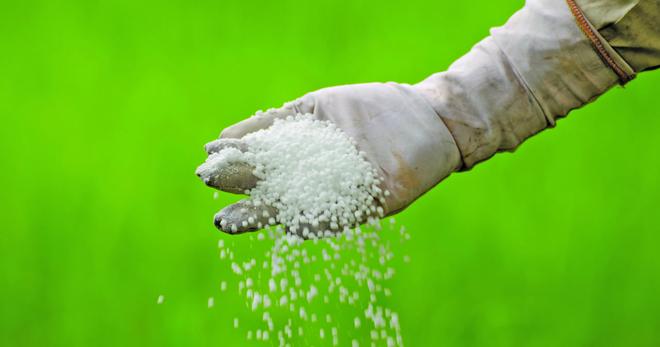 Калийная селитра: свойства удобрения и влияние на растения, способы применения нитрата калия в садоводстве