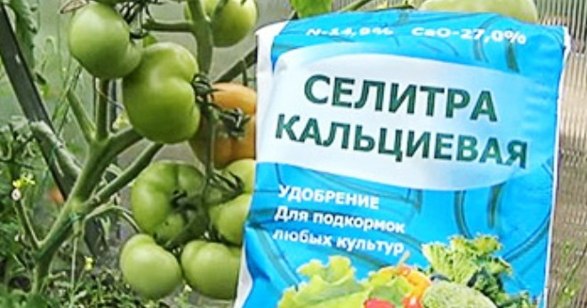 Кальциевая селитра для помидор - все о пользе удобрения и его применении