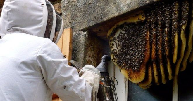 Борная кислота и пчлы