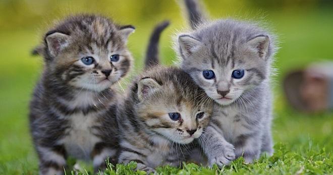 Инструкция по применению таблеток мильбемакс для кошек и котят