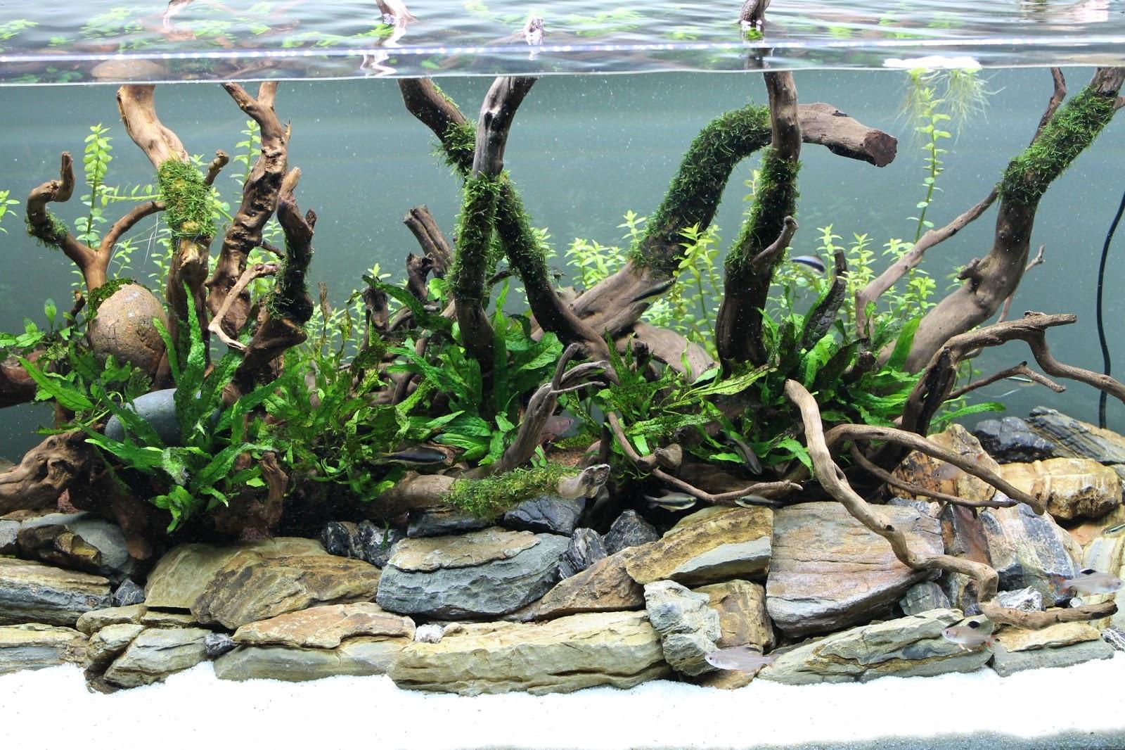 камни для аквариума фото своим