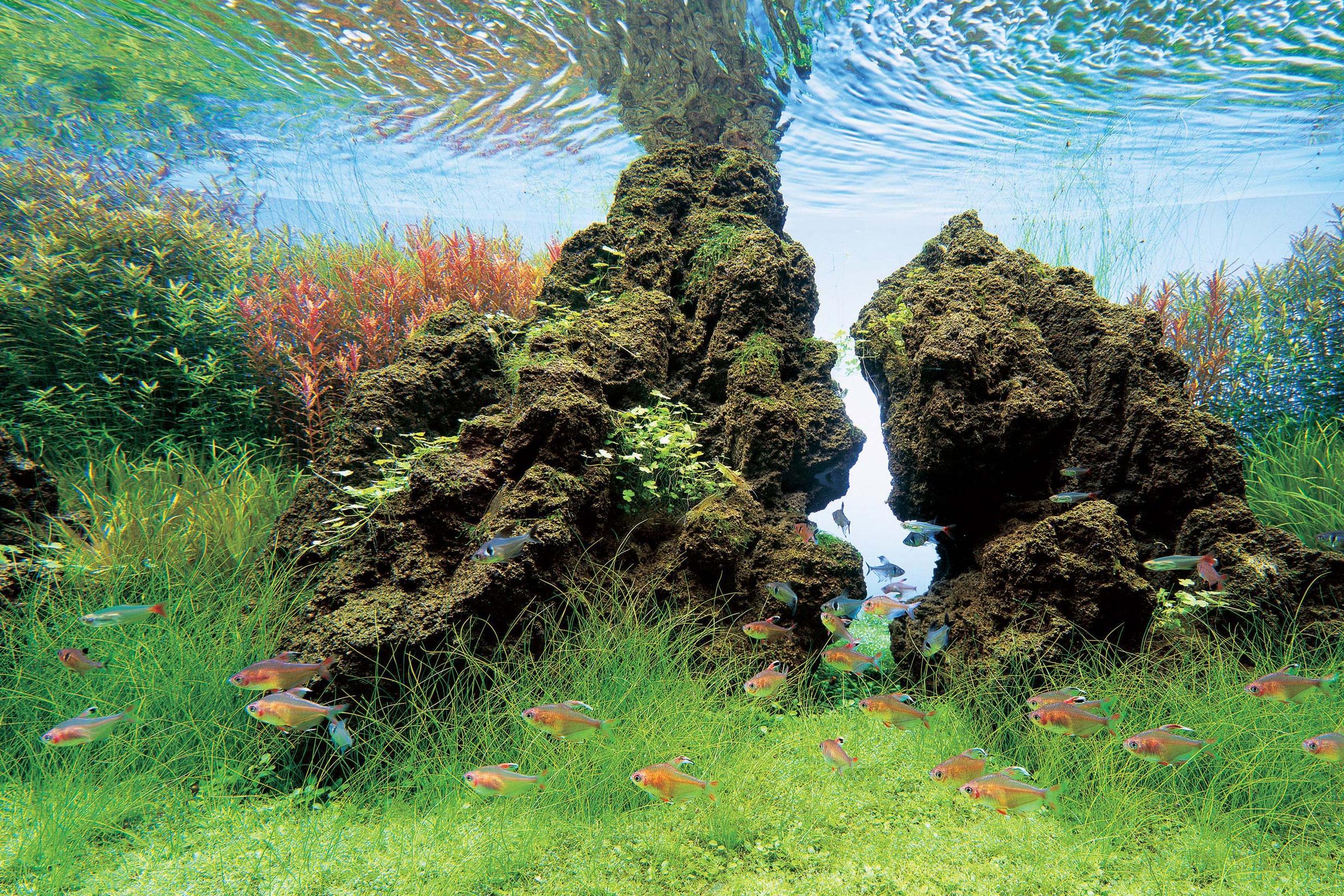 Ландшафтные картинки для аквариума, сделать