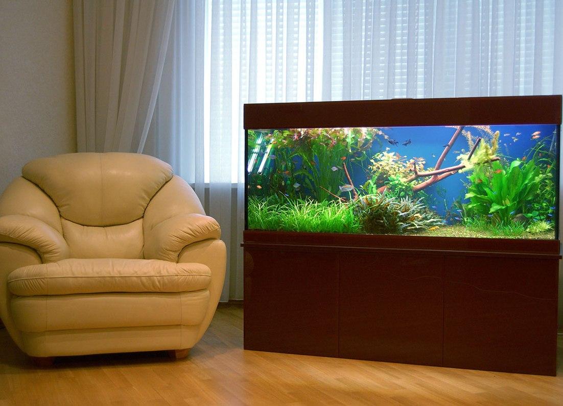 внешне эти большие домашние аквариумы фото сорта шалота отличаются