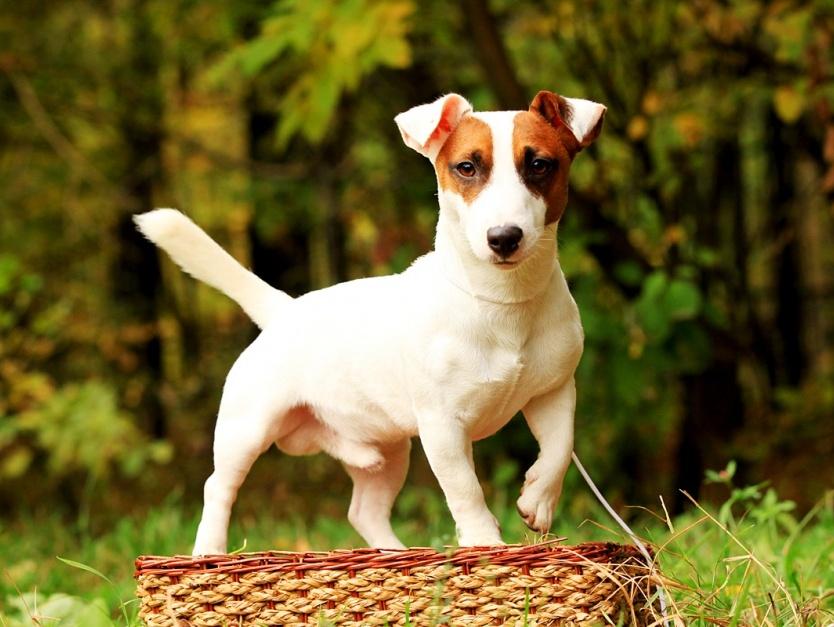 собак породы с фото