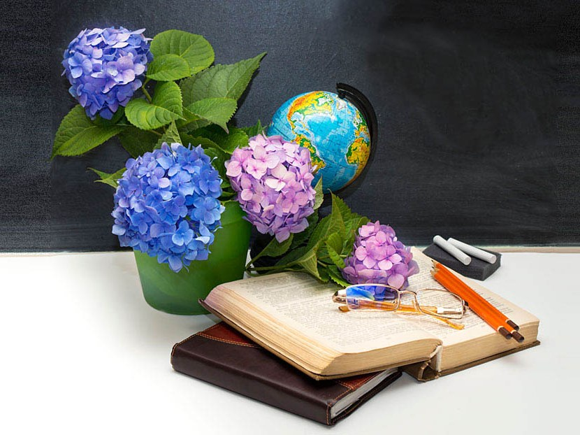 Фото цветов с днем учителя отличаются аутентичными