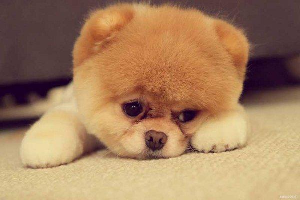Самые милые собаки, фото милых собак