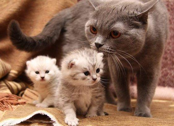 Сонник новорожденные котята к чему снится новорожденные котята во сне