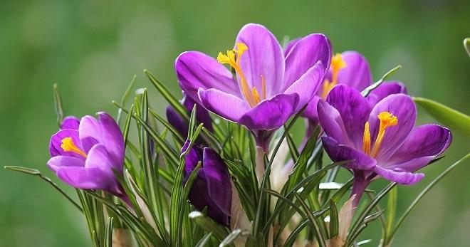 Весенние приметы - народные приметы про весну и о погоде весной