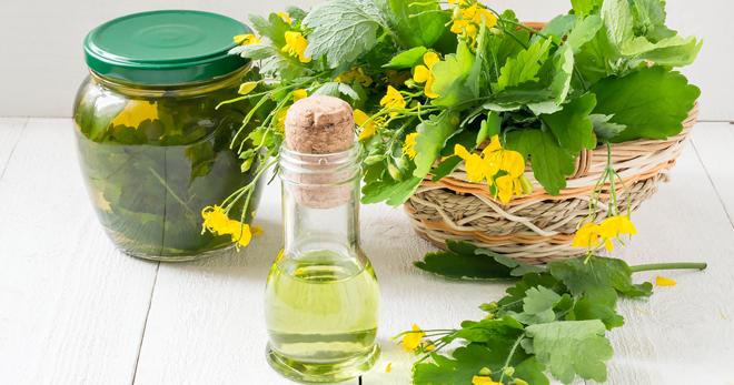 Как сделать масло из чистотела в домашних условиях 51