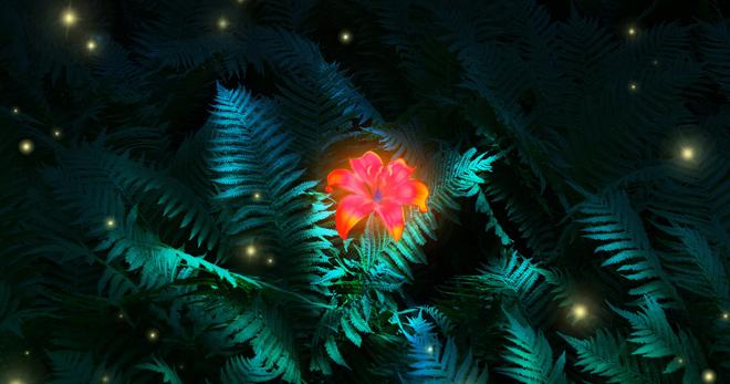 Цветок папоротника в славянской мифологии - как выглядит и как найти?