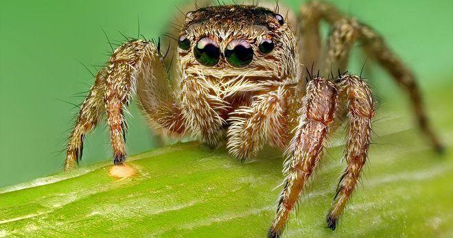 К чему снится большой рыжий паук || Сонник паук большой рыжий
