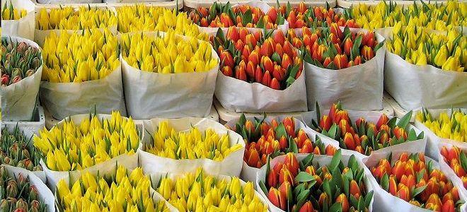 бизнес идеи с цветами