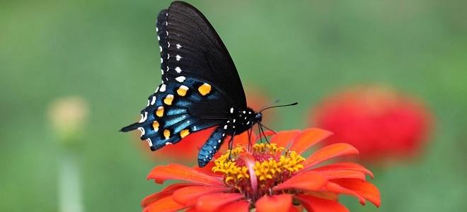 Картинки по запросу Бабочка