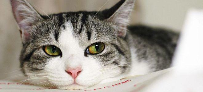К чему снится раненая кошка в крови типа гуд
