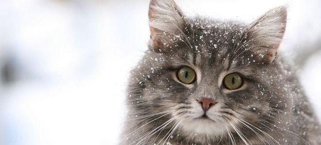к чему снятся кошки женщине