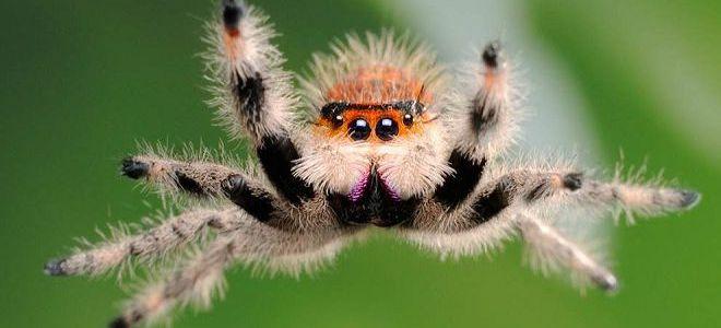 к чему снятся пауки большие