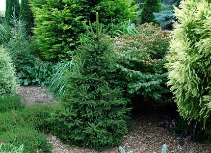 Какие деревья можно сажать возле дома приметы 190