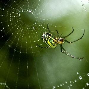 Паук плетет паутину к чему это