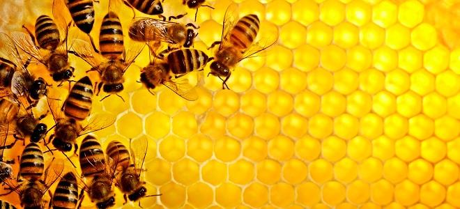пчелиные соты польза и вред