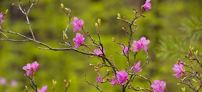 приметы ранней весны