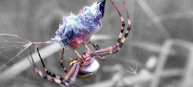 приснился паук
