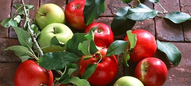 продукты содержащие витамин в12 в большом количестве