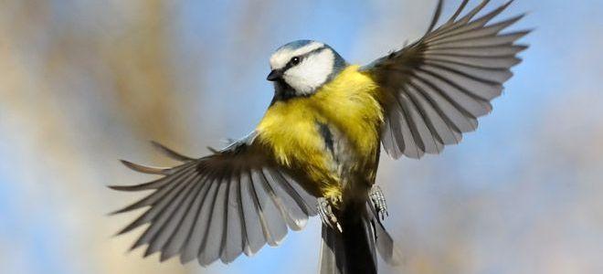 птица залетела в окно