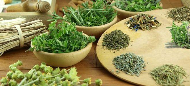 травы для лечения печени1