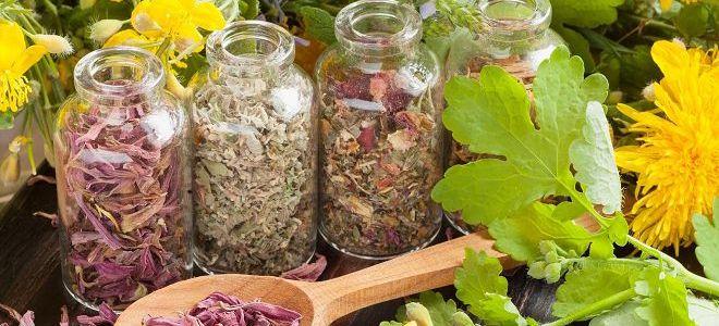 травы для лечения печени2