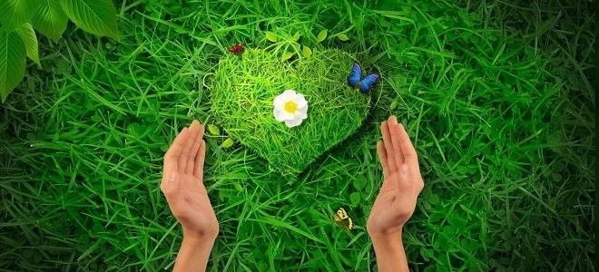 травы для сердца2