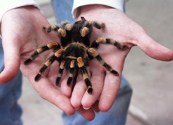 Как выглядит укус домашнего и ядовитого паука: симптомы и последствия
