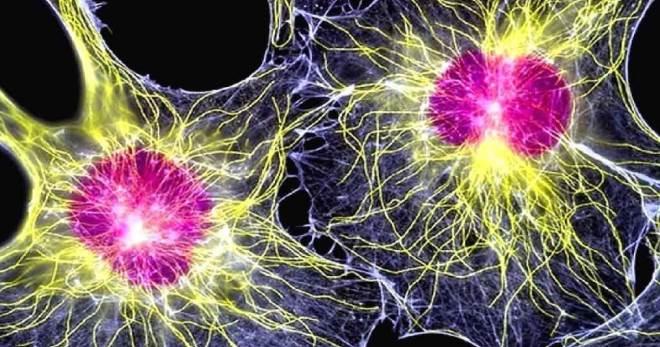 Лекарство из пуповины — перспектива использования стволовых клеток. Стволовые клетки из пуповинной крови
