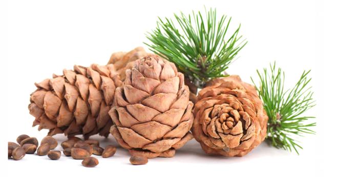 Кедровые орехи – полезные свойства и противопоказания, о которых вы не знали