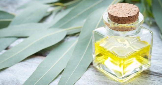 Масло эвкалипта – свойства и применение для красоты и здоровья