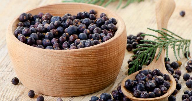 Состав и польза ягод можжевельника для здоровья
