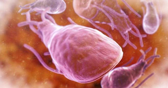паразиты в суставах лечение