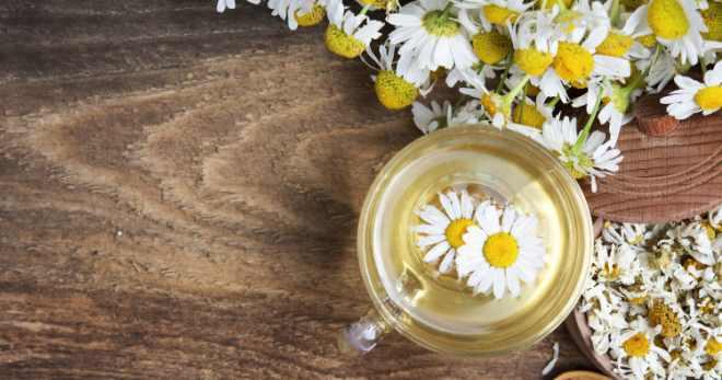 Отвар ромашки для волос – 4 лучших рецепта для красоты и здоровья локонов