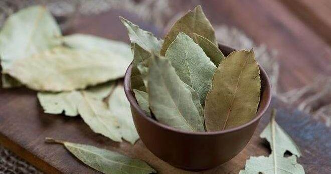 Лавровый лист – лечебные свойства и 7 простых рецептов для красоты и здоровья