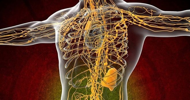 Лимфатическая, система, движение, очистка, река, жизни, чистота, спорт, сауна, лимфа