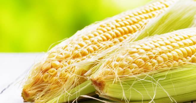 Кукурузные рыльца. Лечебные свойства и противопоказания