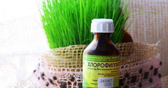 Хлорофиллипт масляный раствор – инструкция по применению