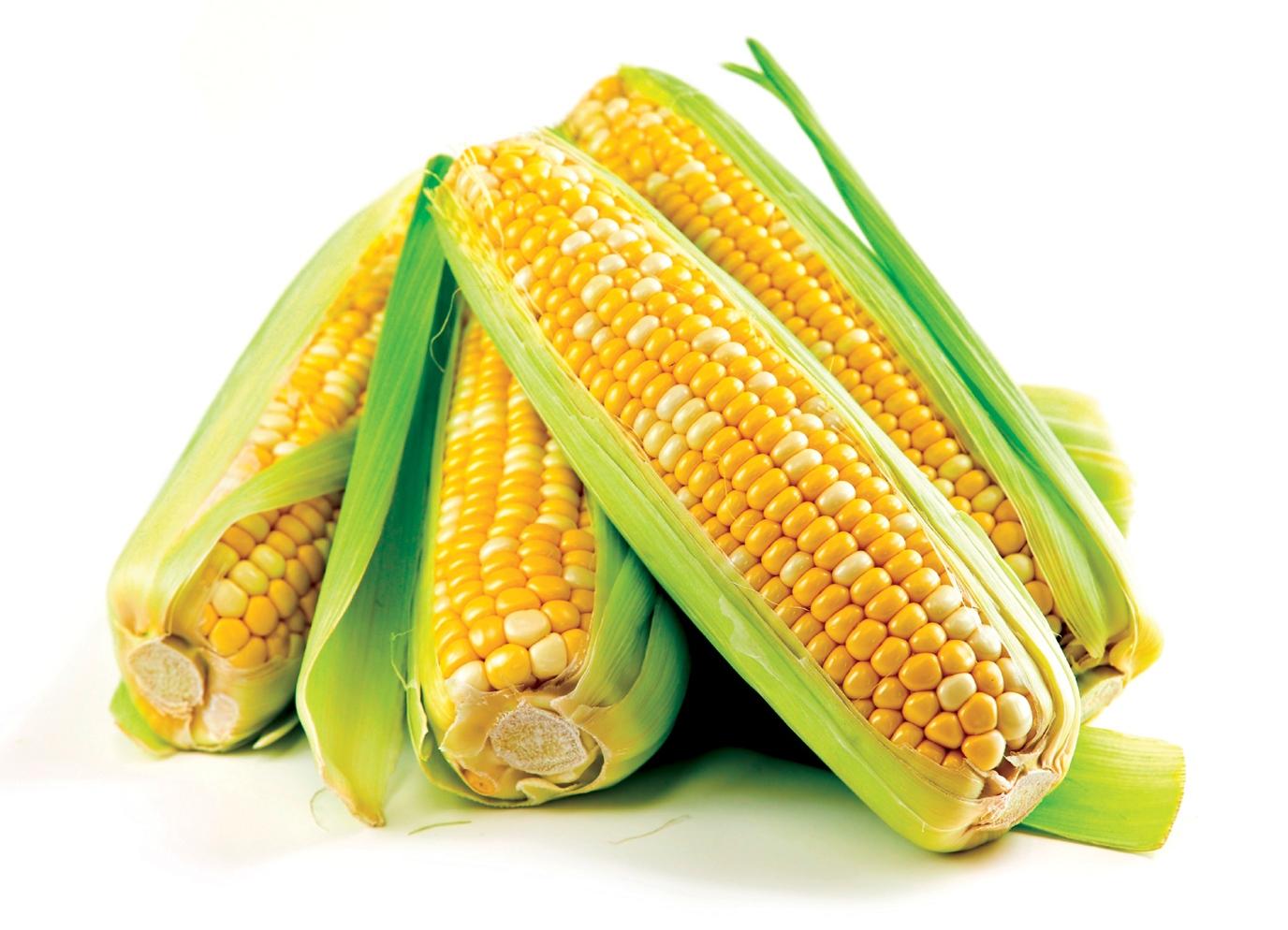 Кукуруза при беременности, можно ли беременным кукурузу