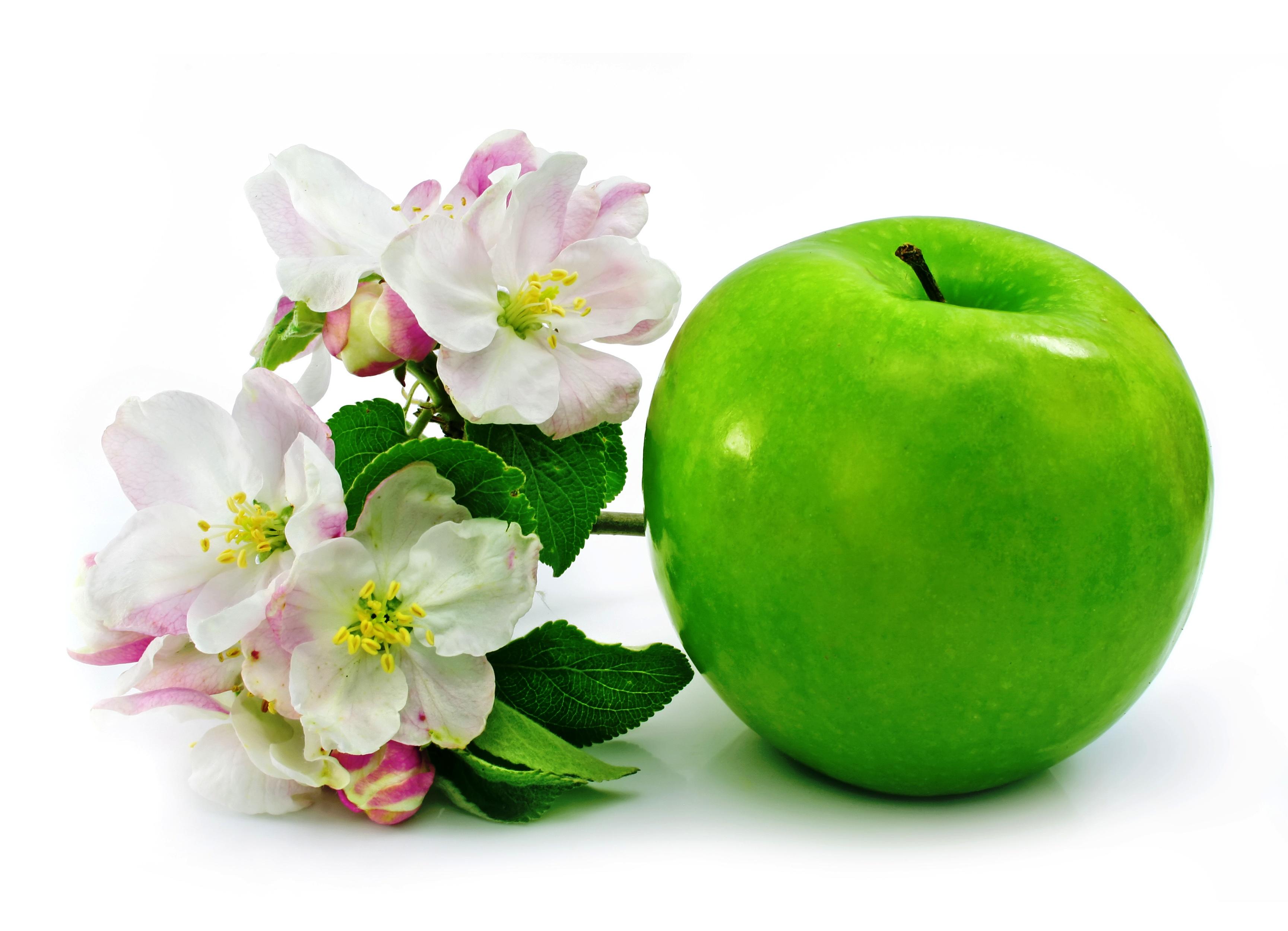 Зеленые яблоки при беременности: можно ли, полезные свойства и противопоказания